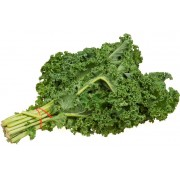 KALE, GREEN BUNCHED 24 BUNCH