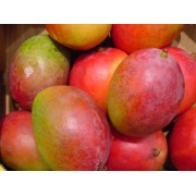 MANGOS, FRESH, LARGE 8-10 CT