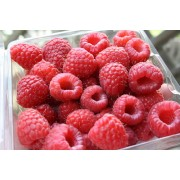 RASPBERRIES, FRESH, 12 / 6oz.