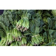 SPINACH, BUNCHED 24-BUNCH CASE