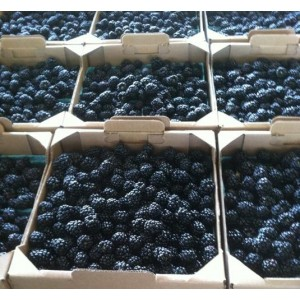 BLACKBERRIES, FRESH, 12 / 6oz.